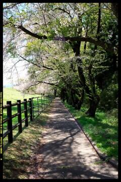 群馬の大胡グリーンフラワー牧場と桜と②