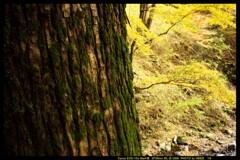 秋の榛名神社にて⑰