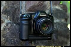 ひんでコレクション Canon EOS-1DP①