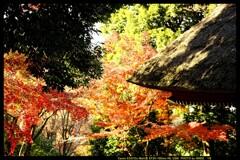 秋の少林山達磨寺にて⑱