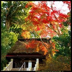 秋の少林山達磨寺にて㉒