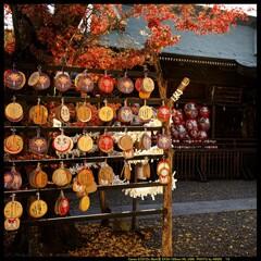 秋の少林山達磨寺にて⑩