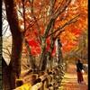 秋の榛名湖にて④