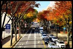 前橋駅前散策と紅葉と①