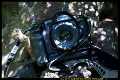 ひんでコレクション Canon EOS-1DP③