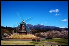 風車と桜と赤城山と②