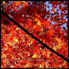 秋の少林山達磨寺にて⑯