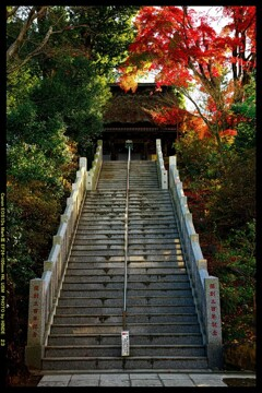 秋の少林山達磨寺にて㉑
