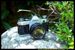 ひんでコレクション Canon AE-1 ①