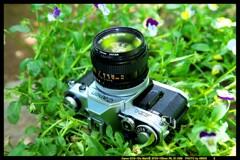 ひんでコレクション Canon AE-1 ④