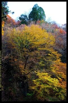 秋の榛名神社にて⑯