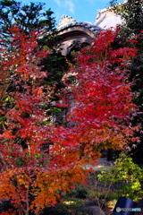 群馬赤城福増寺の秋⑧