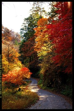 秋の榛名神社にて⑭