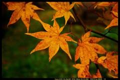 秋の六合村赤岩集落にて㉑