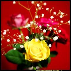希望と愛とバラと④