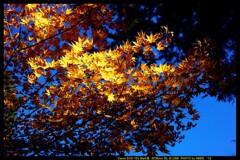 秋の榛名神社にて⑩