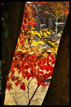 前橋駅前散策と紅葉と⑭