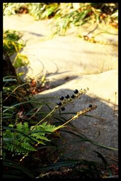 冬の臨江閣日本庭園にて⑥
