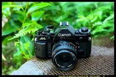ひんでコレクション Canon A-1 ③