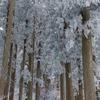 樹氷の林道