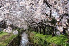 春の小川〜♬