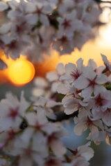 夕陽とともに