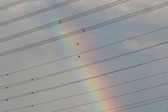 カア、カア、虹だ!
