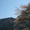 里山の春05