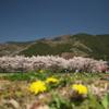 里山の春03
