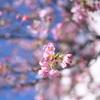 春近し04