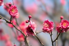 春を待つ01