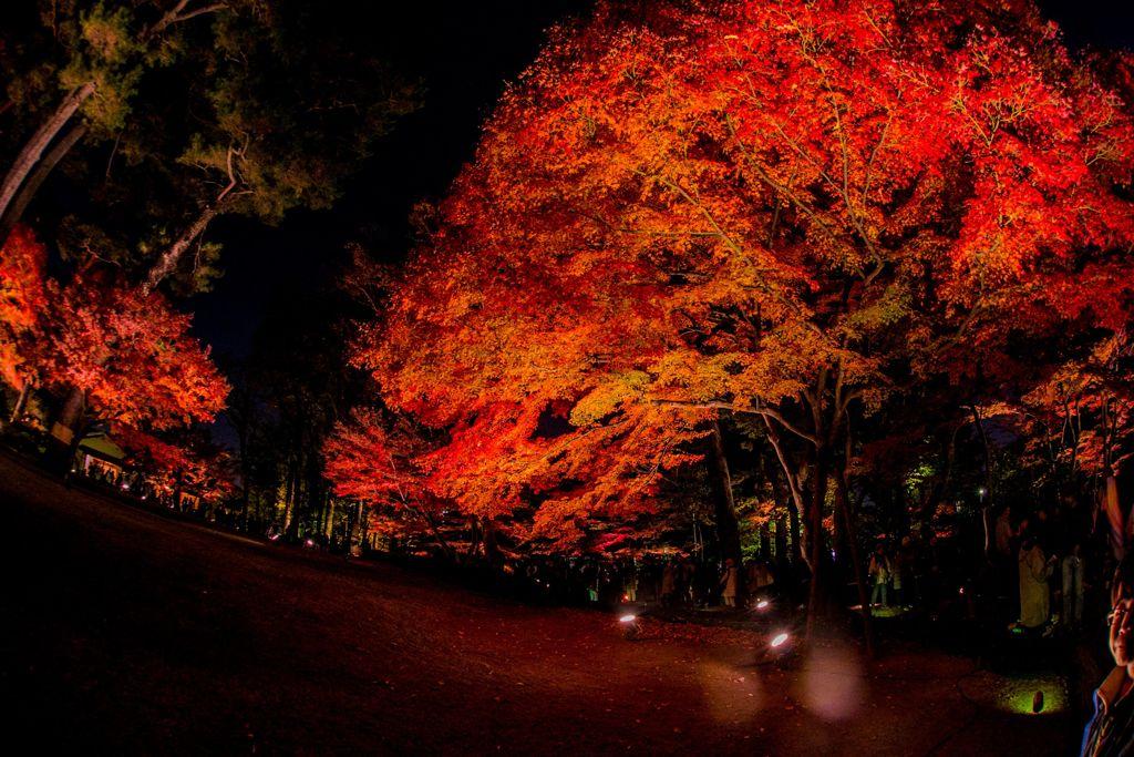 紅葉ライトアップ006