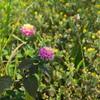 中央分離帯の雑草 1