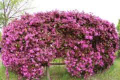 春色の生け垣