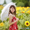 盛夏の向日葵