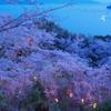 夜桜瀬戸内。。