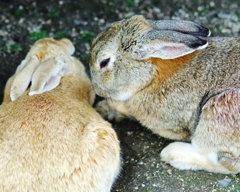 ウサギの楽園。