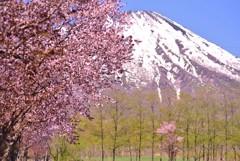 桜色の蝦夷富士♪