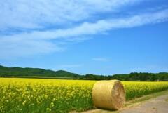 青空と雲と菜の花と麦ロール~♪
