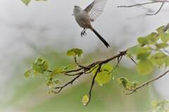希望への飛翔~♪