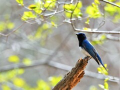 """幸せの青い鳥♪*"""""""