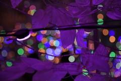 """紫な夜★*"""""""