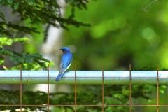"""幸せの青い鳥めっけ♪**"""""""