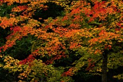 森のお色直し~紅~