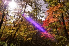 森の妖精♪d(⌒ー⌒)!希望の光♪