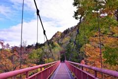 """吊り橋からの紅葉♪**"""""""