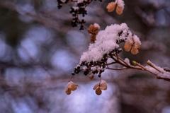 """♪**""""白い森に咲く♪**"""""""