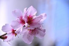"""♪**"""" 春を愛でる♪**"""""""