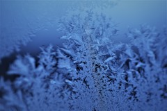 """**""""Frost flowes**"""""""