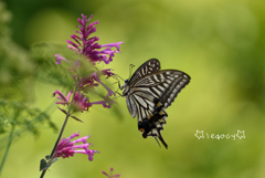 月曜日の蝶々